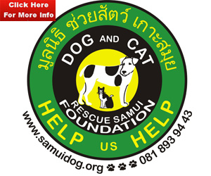 Dog and Cat Rescue Ko Samui